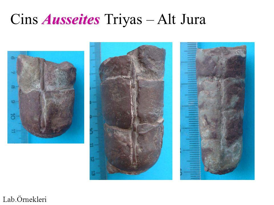 Ausseites Cins Ausseites Triyas – Alt Jura Lab.Örnekleri