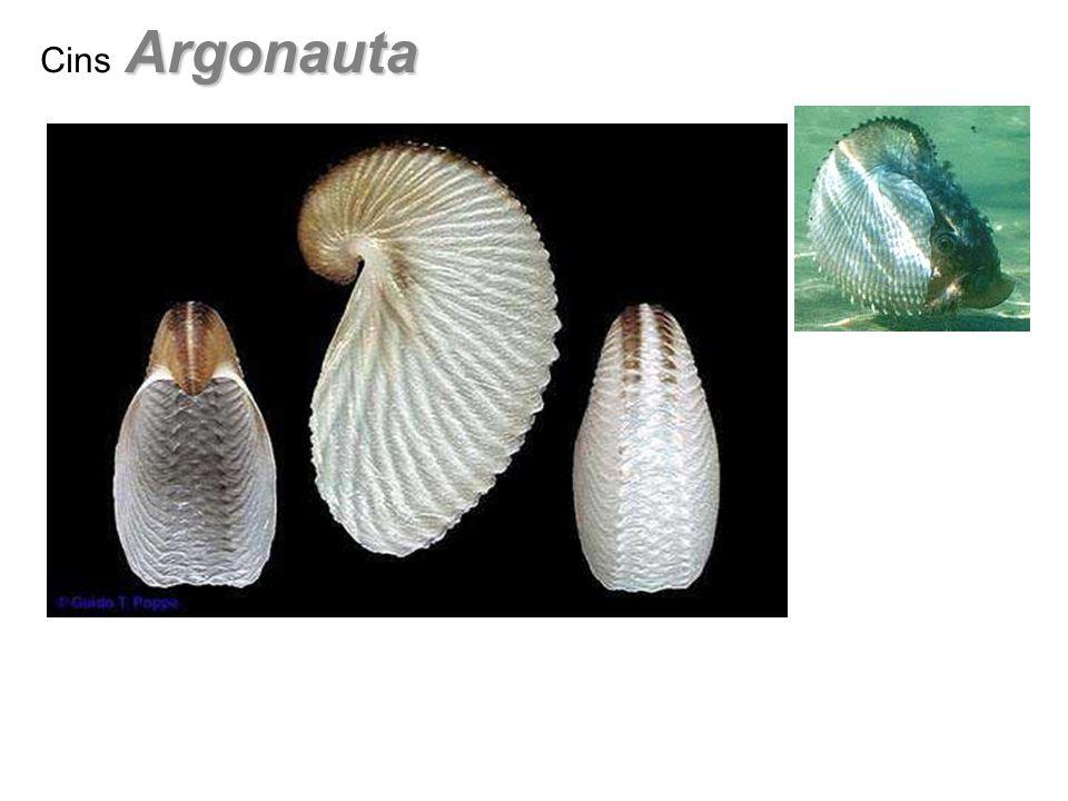 Ausseites Cins Ausseites Triyas – Alt Jura Füsun Alkaya Lab.Örnekleri