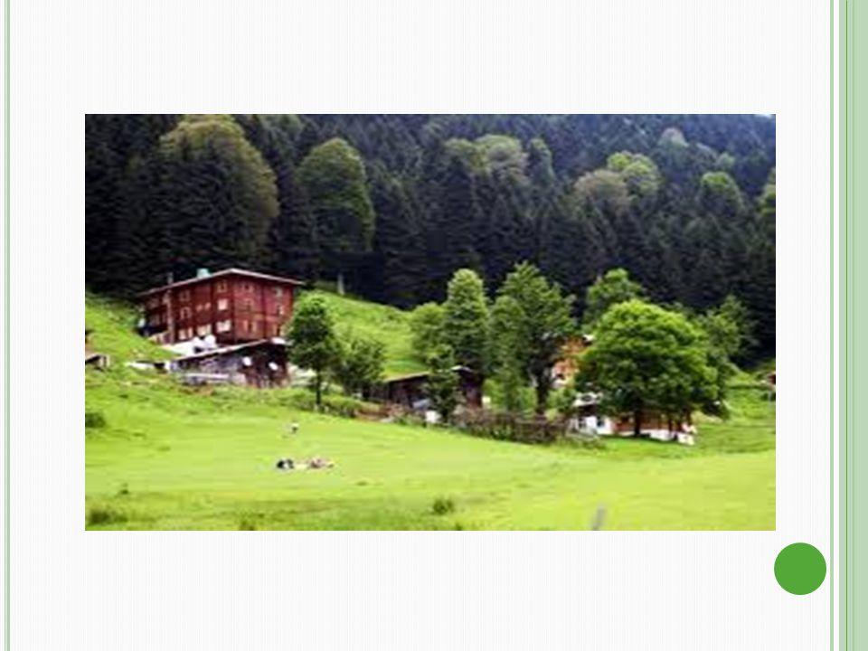 Genel olarak yaylalar, aşağı yukarı 1500-2000 metre olan orman sınırının hemen üzerinden başlayıp, bölgeler arası farklılıklarla 3000-3500 metreye kadar yüksekte olabilirler.Yurdumuzda yaylacılık faaliyetlerini günümüzde 3 ayrı kategoride değerlendirebilmek mümkün görünmektedir.