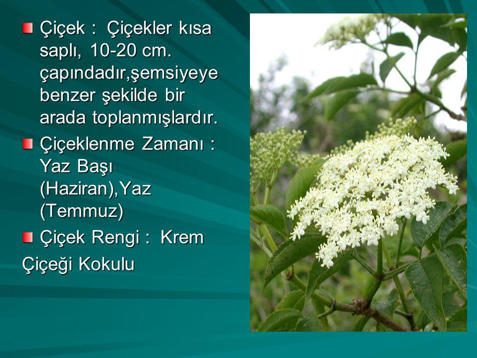 Çiçek : Çiçekler kısa saplı, 10-20 cm.