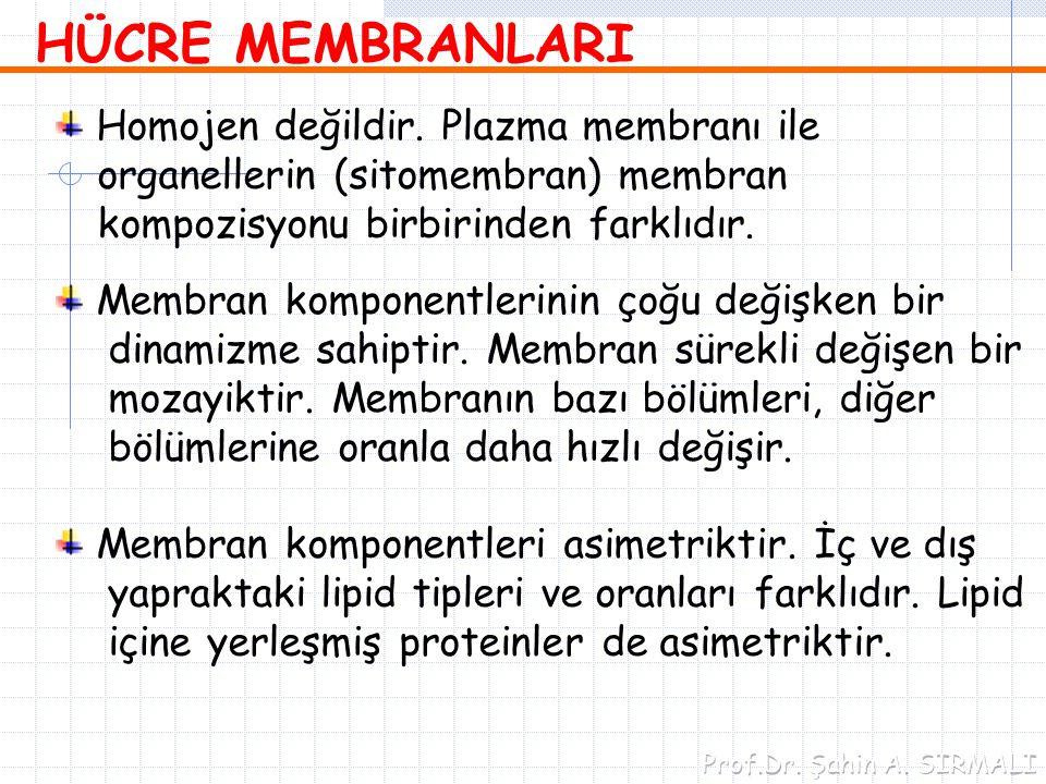 HÜCRE MEMBRANLARI Homojen değildir. Plazma membranı ile organellerin (sitomembran) membran kompozisyonu birbirinden farklıdır. Membran komponentlerini