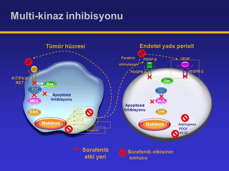 KIT/Flt-3/ RET Anjiiogenez Raf Endotel yada perisit Nukleus VEGFR-2 PDGFR-β MEK Apopitosiz Inhibisyonu Tümör hücresi Proliferasyon PDGF VEGF EGF Hücre