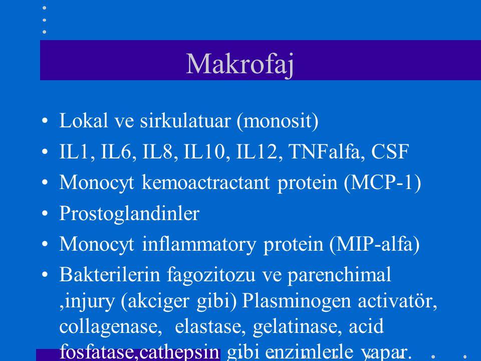 Makrofaj Lokal ve sirkulatuar (monosit) IL1, IL6, IL8, IL10, IL12, TNFalfa, CSF Monocyt kemoactractant protein (MCP-1) Prostoglandinler Monocyt inflam