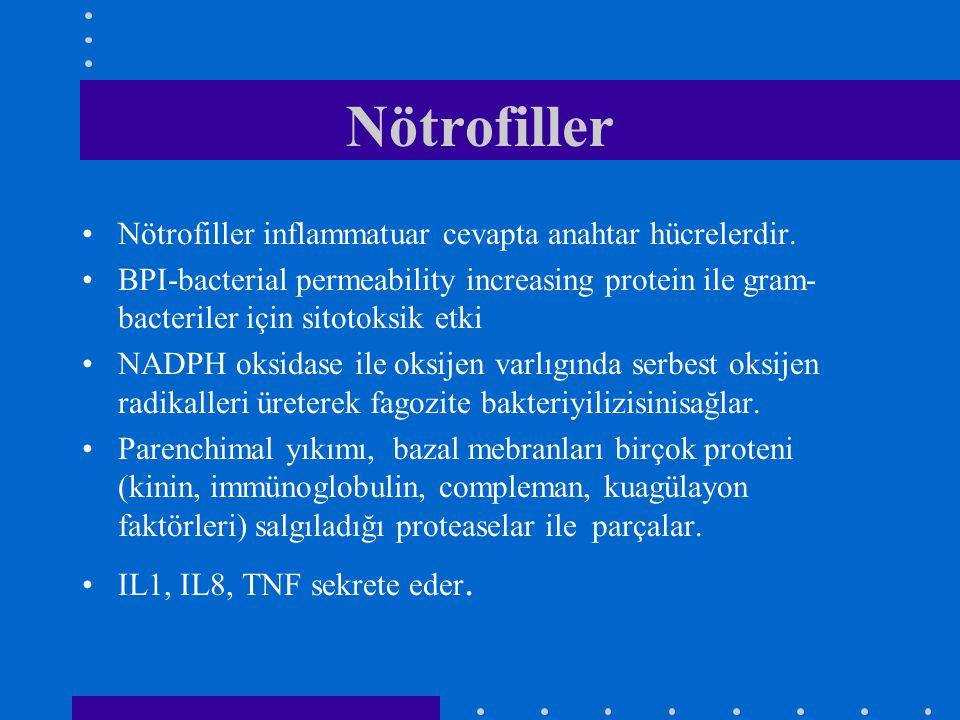 Nötrofiller Nötrofiller inflammatuar cevapta anahtar hücrelerdir. BPI-bacterial permeability increasing protein ile gram- bacteriler için sitotoksik e