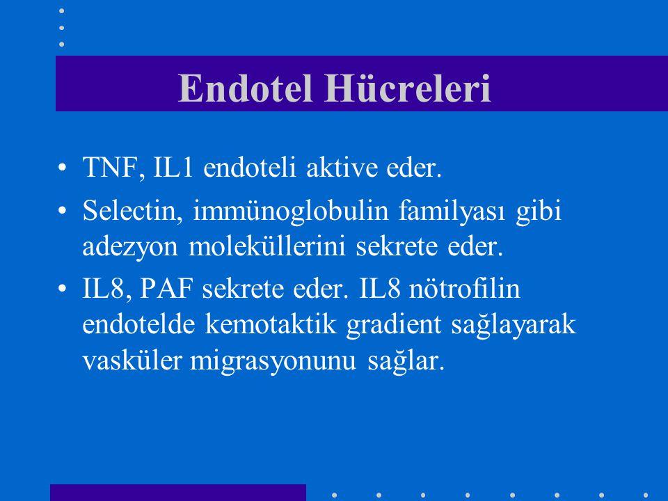 Endotel Hücreleri TNF, IL1 endoteli aktive eder. Selectin, immünoglobulin familyası gibi adezyon moleküllerini sekrete eder. IL8, PAF sekrete eder. IL