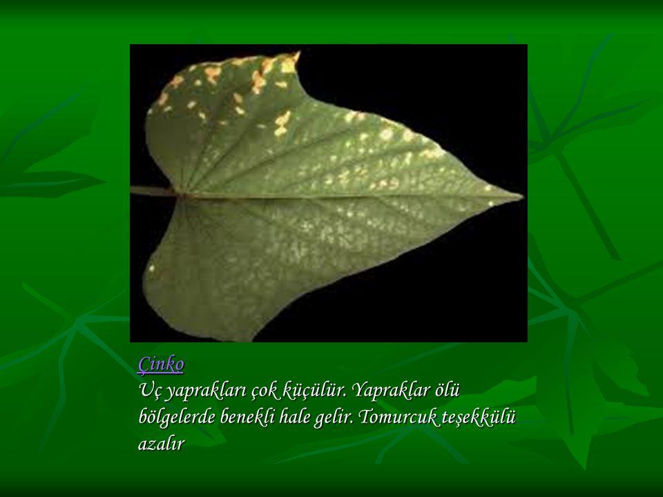 Çinko Çinko Uç yaprakları çok küçülür. Yapraklar ölü bölgelerde benekli hale gelir. Tomurcuk teşekkülü azalır Çinko