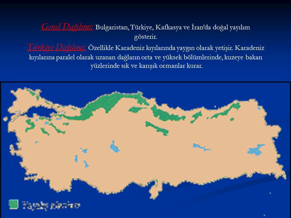 Genel Dağılımı: Bulgaristan, Türkiye, Kafkasya ve İran'da doğal yayılım gösterir. Türkiye Dağılımı: Özellikle Karadeniz kıyılarında yaygın olarak yeti
