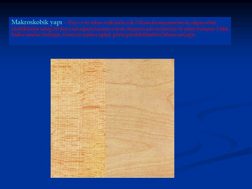 Makroskobik yapı – Diri ve öz odun renk farkı yok.Odunu kırmızımsı beyaz,olgun odun özelliklerine sahip.80'den yaşlı ağaçta kırmızı yürek oluşumu adı