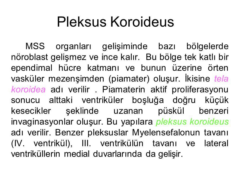 Pleksus Koroideus MSS organları gelişiminde bazı bölgelerde nöroblast gelişmez ve ince kalır. Bu bölge tek katlı bir ependimal hücre katmanı ve bunun