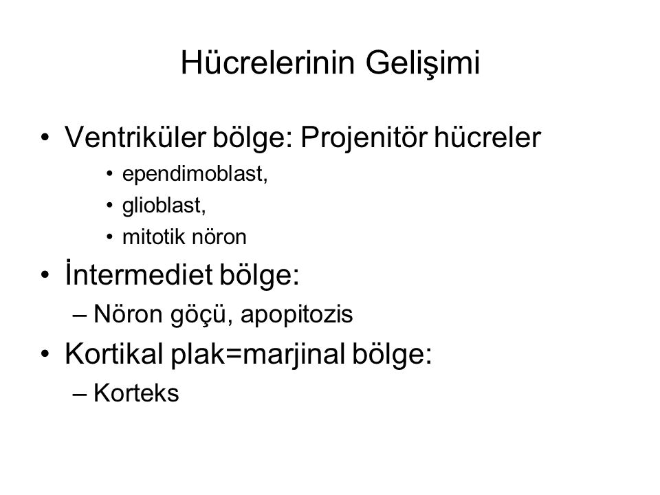 Hücrelerinin Gelişimi Ventriküler bölge: Projenitör hücreler ependimoblast, glioblast, mitotik nöron İntermediet bölge: –Nöron göçü, apopitozis Kortik