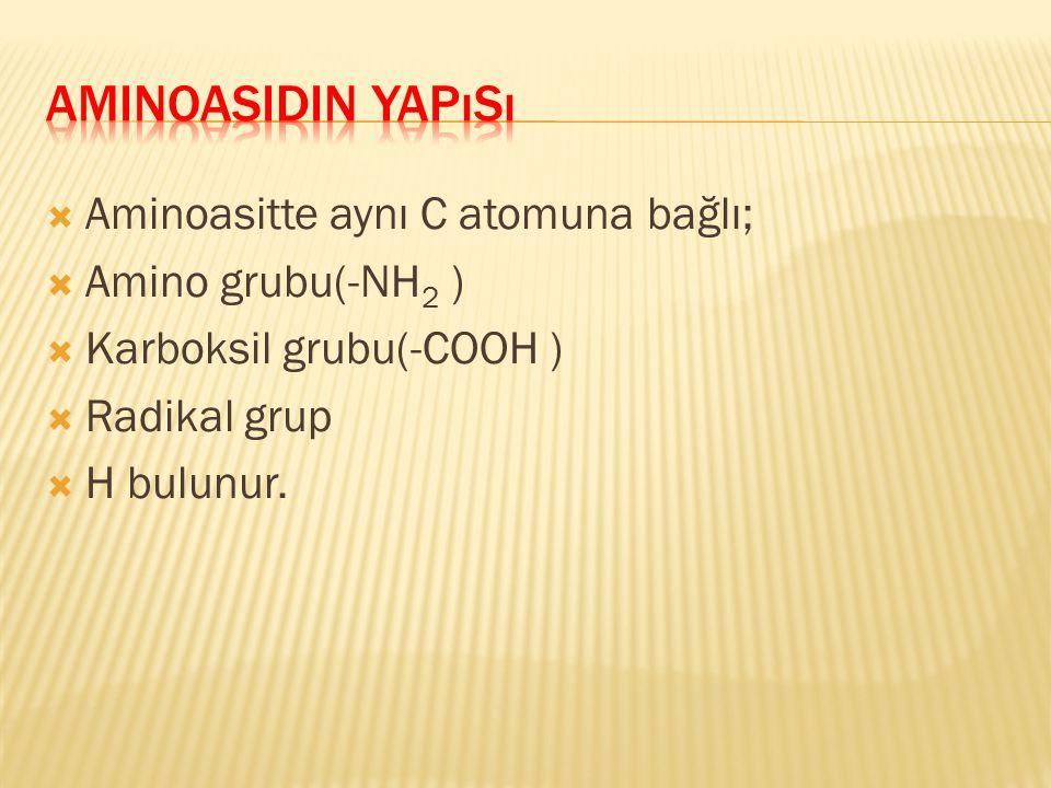  Aminoasitte aynı C atomuna bağlı;  Amino grubu(-NH 2 )  Karboksil grubu(-COOH )  Radikal grup  H bulunur.