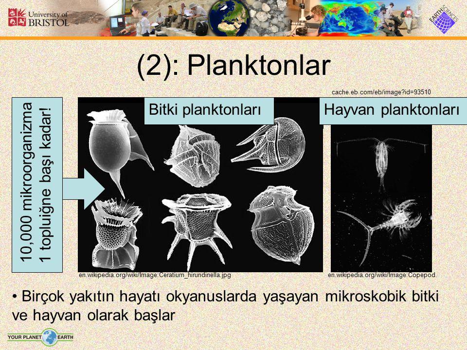 (2): Planktonlar cache.eb.com/eb/image?id=93510 en.wikipedia.org/wiki/Image:Copepod.en.wikipedia.org/wiki/Image:Ceratium_hirundinella.jpg Birçok yakıt