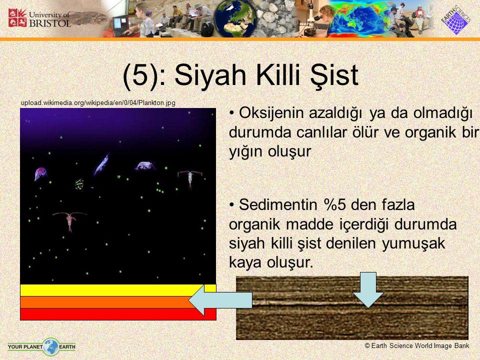 (5): Siyah Killi Şist upload.wikimedia.org/wikipedia/en/0/04/Plankton.jpg Oksijenin azaldığı ya da olmadığı durumda canlılar ölür ve organik bir yığın