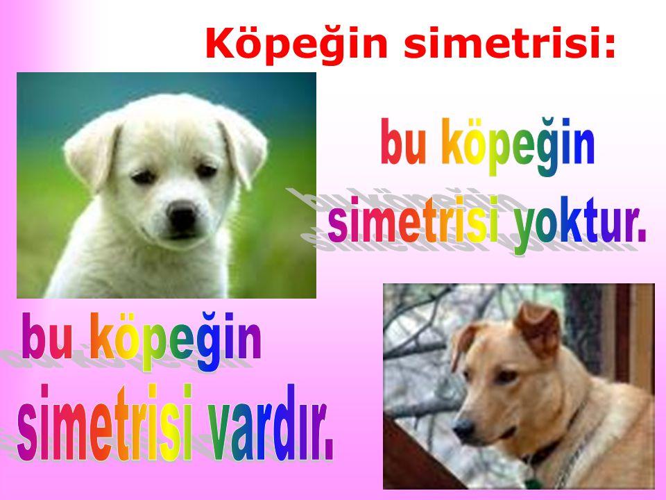 Köpeğin simetrisi: