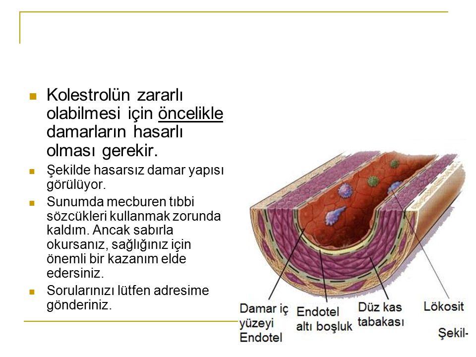 Kolestrolün zararlı olabilmesi için öncelikle damarların hasarlı olması gerekir. Şekilde hasarsız damar yapısı görülüyor. Sunumda mecburen tıbbi sözcü