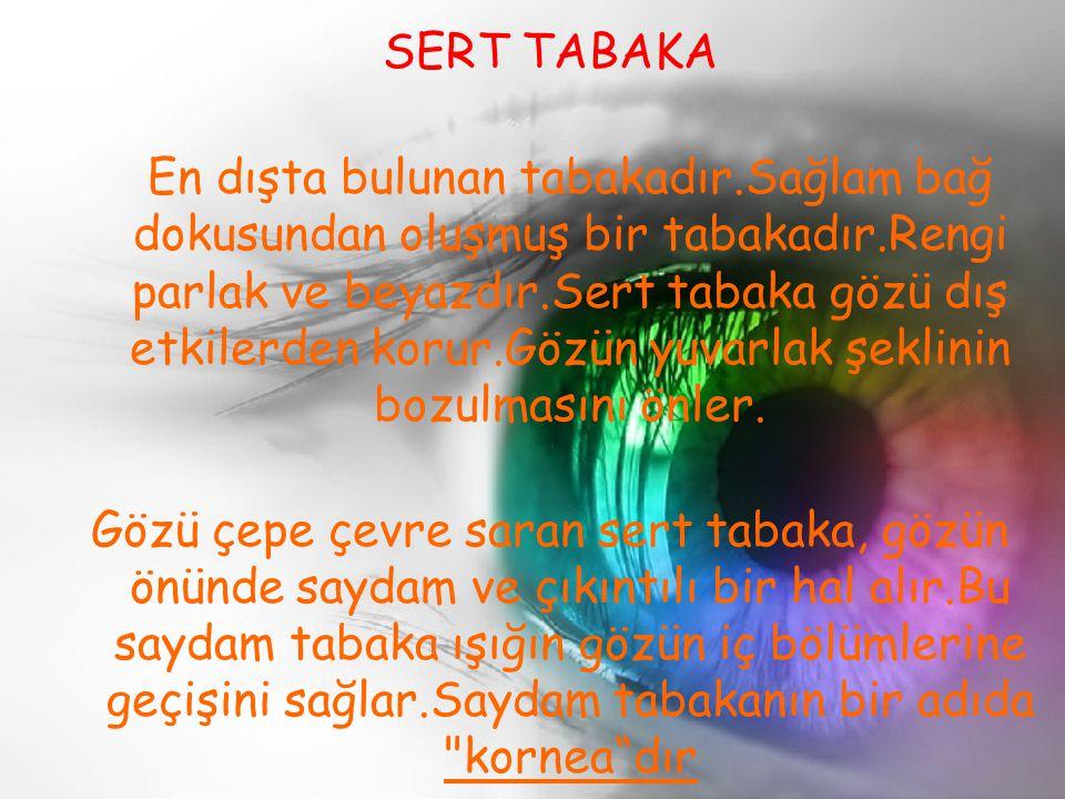 SERT TABAKA En dışta bulunan tabakadır.Sağlam bağ dokusundan oluşmuş bir tabakadır.Rengi parlak ve beyazdır.Sert tabaka gözü dış etkilerden korur.Gözü