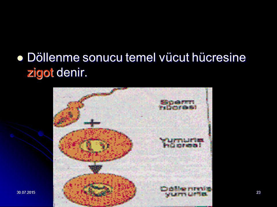 30.07.201523 Döllenme sonucu temel vücut hücresine zigot denir. Döllenme sonucu temel vücut hücresine zigot denir.