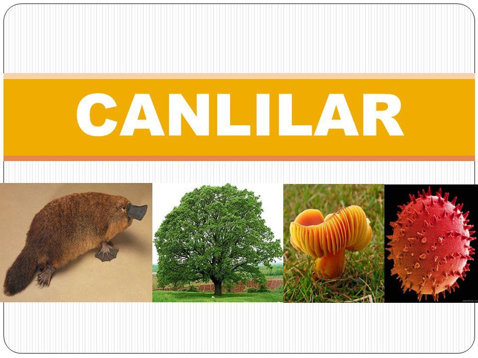 CANLILAR