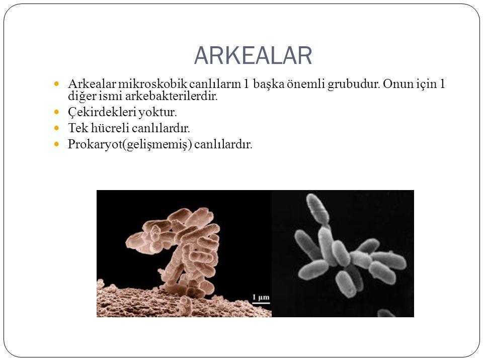 ARKEALAR Arkealar mikroskobik canlıların 1 başka önemli grubudur. Onun için 1 diğer ismi arkebakterilerdir. Çekirdekleri yoktur. Tek hücreli canlılard