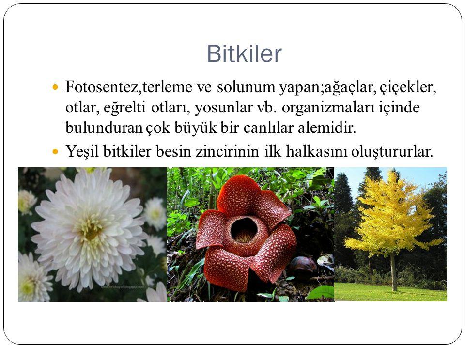 Bitkiler Fotosentez,terleme ve solunum yapan;ağaçlar, çiçekler, otlar, eğrelti otları, yosunlar vb. organizmaları içinde bulunduran çok büyük bir canl