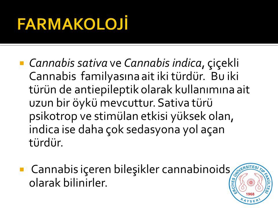  Cannabis sativa ve Cannabis indica, çiçekli Cannabis familyasına ait iki türdür.