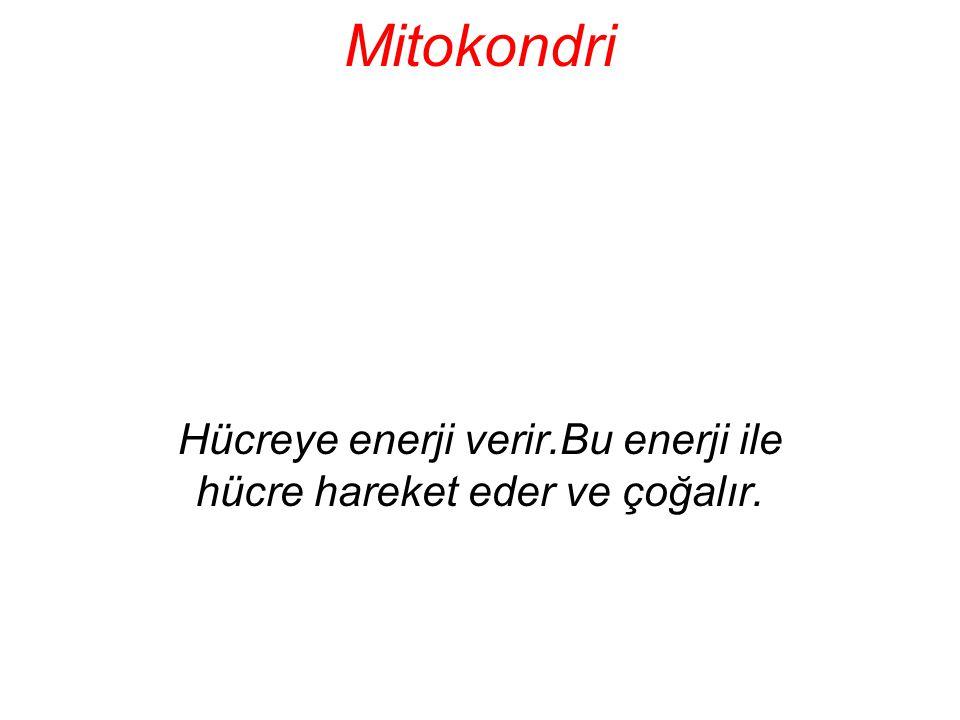 Mitokondri Hücreye enerji verir.Bu enerji ile hücre hareket eder ve çoğalır.