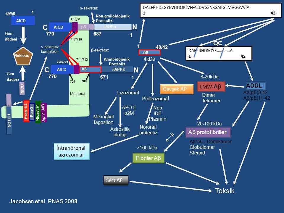 p3 sAPPα N C C N sAPPβ Aβ Membran AICD α-sekretaz β-sekretaz γ-sekretaz kompleksi 711/713 671 687 770 1 1 Nukleus Gen ifadesi 720/721 AICD 723 700 1 4