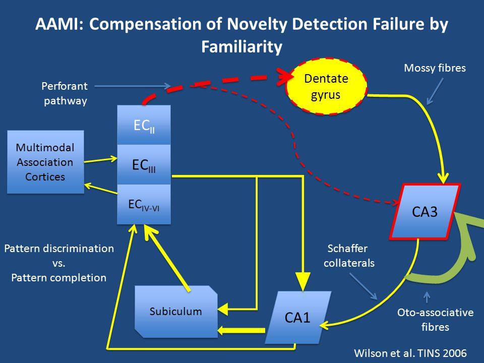 AAMI: Compensation of Novelty Detection Failure by Familiarity EC II EC III EC IV-VI Multimodal Association Cortices Multimodal Association Cortices D