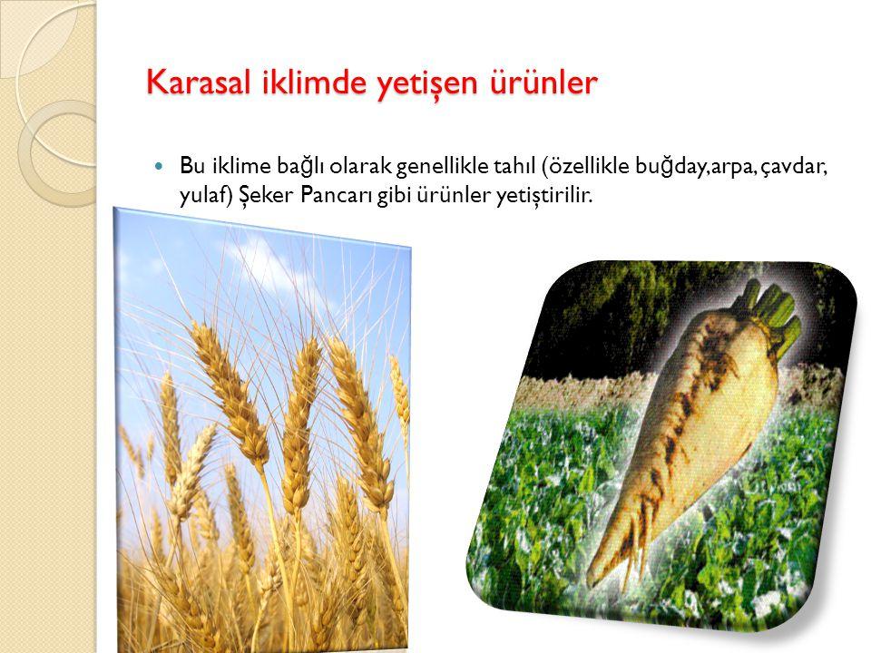 Karasal iklimde yetişen ürünler Bu iklime ba ğ lı olarak genellikle tahıl (özellikle bu ğ day,arpa, çavdar, yulaf) Şeker Pancarı gibi ürünler yetiştirilir.