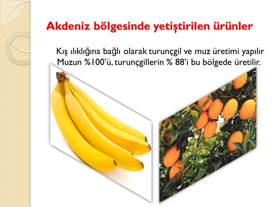 Akdeniz bölgesinde yetiştirilen ürünler Kış ılıklı ğ ına ba ğ lı olarak turunçgil ve muz üretimi yapılır Muzun %100'ü, turunçgillerin % 88'i bu bölgede üretilir.