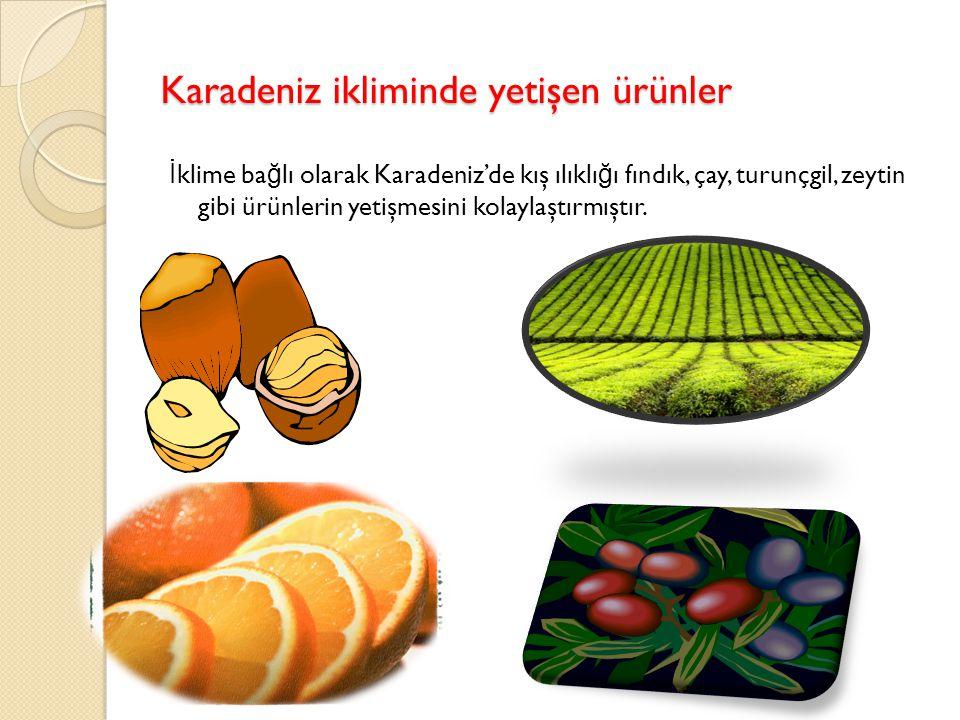 Karadeniz ikliminde yetişen ürünler İ klime ba ğ lı olarak Karadeniz'de kış ılıklı ğ ı fındık, çay, turunçgil, zeytin gibi ürünlerin yetişmesini kolaylaştırmıştır.