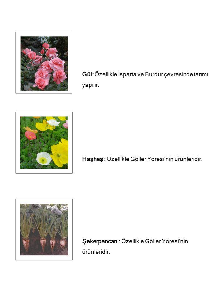 Soya fasulyesi, yer fıstığı ve mısır üretiminde de Türkiye de ilk sıradadır..