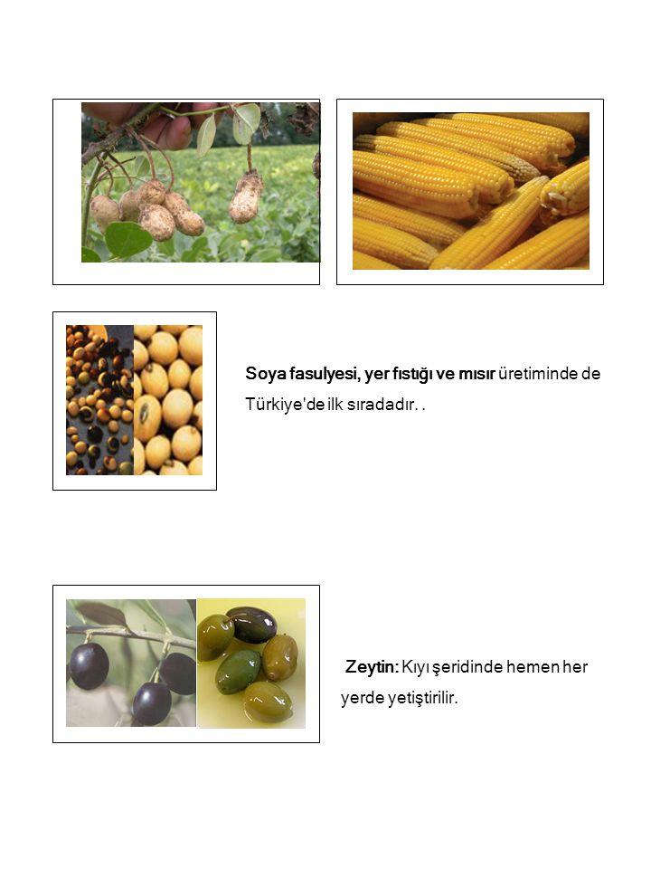 Soya fasulyesi, yer fıstığı ve mısır üretiminde de Türkiye'de ilk sıradadır.. Zeytin: Kıyı şeridinde hemen her yerde yetiştirilir.
