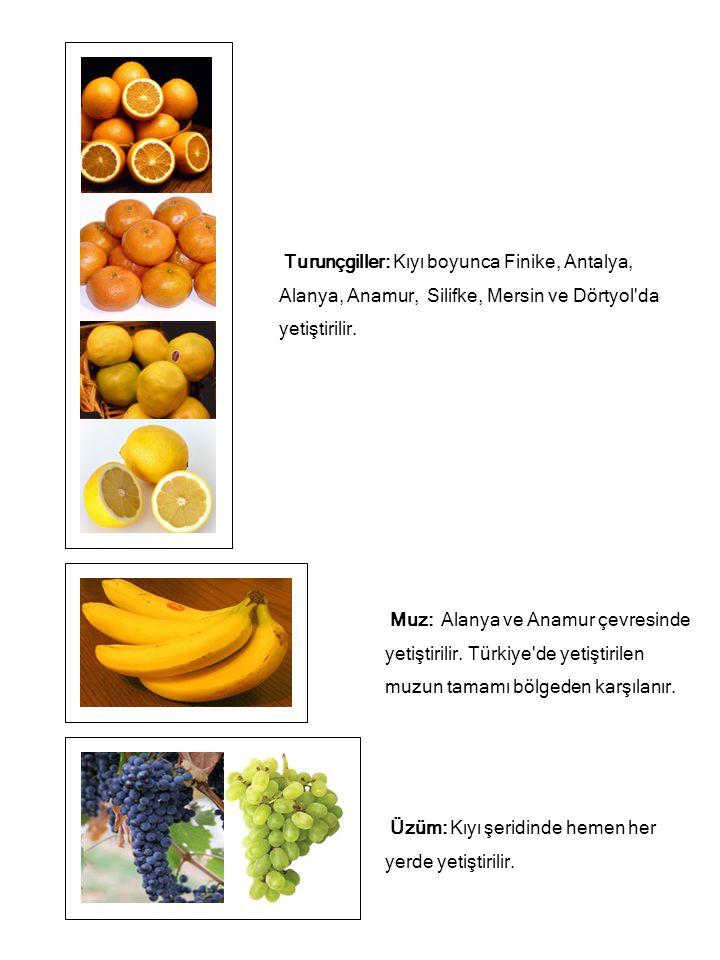 Üzüm: Kıyı şeridinde hemen her yerde yetiştirilir. Muz: Alanya ve Anamur çevresinde yetiştirilir. Türkiye'de yetiştirilen muzun tamamı bölgeden karşıl