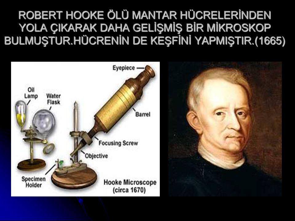 ROBERT HOOKE ÖLÜ MANTAR HÜCRELERİNDEN YOLA ÇIKARAK DAHA GELİŞMİŞ BİR MİKROSKOP BULMUŞTUR.HÜCRENİN DE KEŞFİNİ YAPMIŞTIR.(1665)