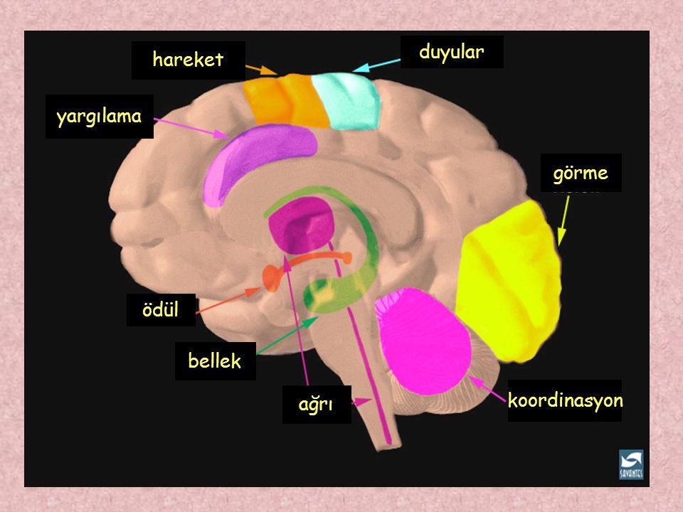 ödül bellek ağrı yargılama hareket duyular görme koordinasyon