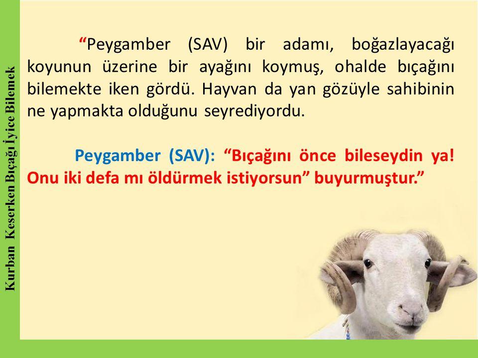 """""""Peygamber (SAV) bir adamı, boğazlayacağı koyunun üzerine bir ayağını koymuş, ohalde bıçağını bilemekte iken gördü. Hayvan da yan gözüyle sahibinin ne"""