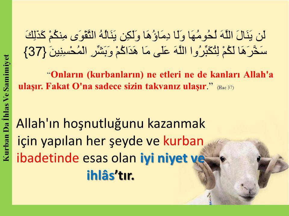 Peygamber (SAV) bir adamı, boğazlayacağı koyunun üzerine bir ayağını koymuş, ohalde bıçağını bilemekte iken gördü.