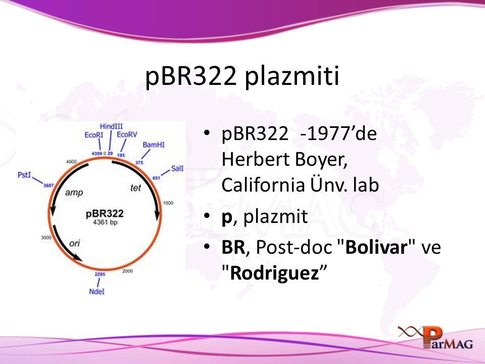 pBR322 plazmiti pBR322-1977'de Herbert Boyer, California Ünv. lab p, plazmit BR, Post-doc