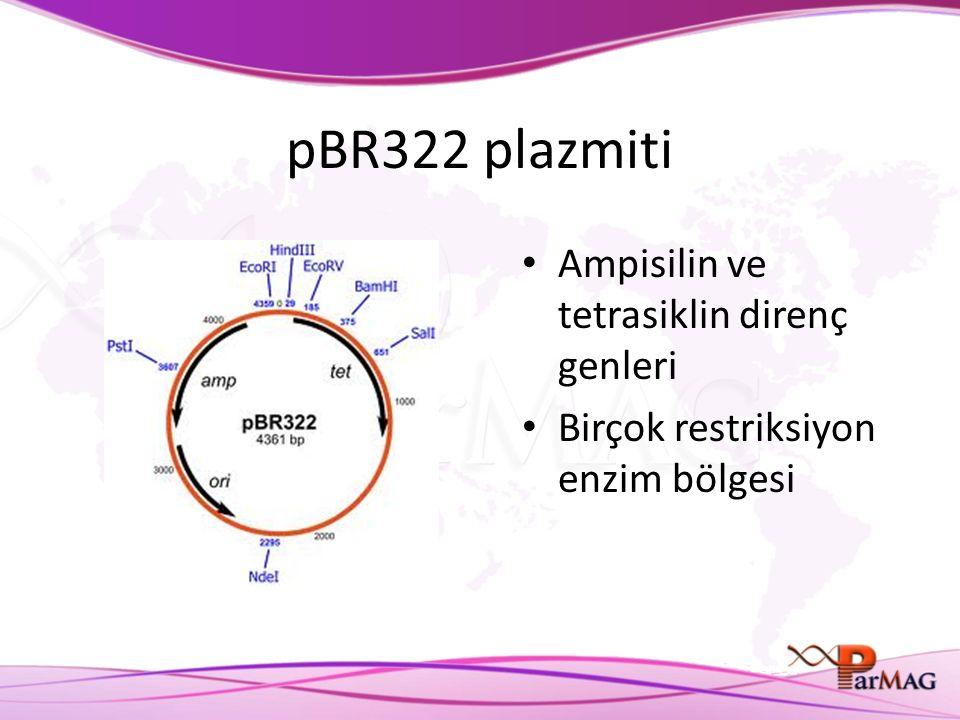 pBR322 plazmiti Ampisilin ve tetrasiklin direnç genleri Birçok restriksiyon enzim bölgesi