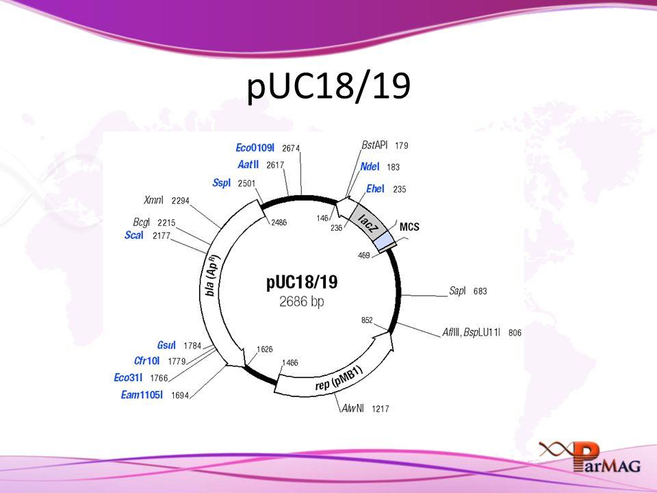 pUC18/19