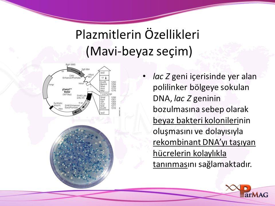 Plazmitlerin Özellikleri (Mavi-beyaz seçim) lac Z geni içerisinde yer alan polilinker bölgeye sokulan DNA, lac Z geninin bozulmasına sebep olarak beyaz bakteri kolonilerinin oluşmasını ve dolayısıyla rekombinant DNA'yı taşıyan hücrelerin kolaylıkla tanınmasını sağlamaktadır.