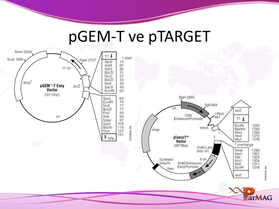 pGEM-T ve pTARGET