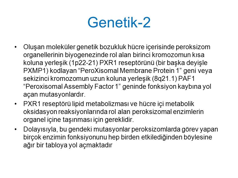 Genetik-2 Oluşan moleküler genetik bozukluk hücre içerisinde peroksizom organellerinin biyogenezinde rol alan birinci kromozomun kısa koluna yerleşik