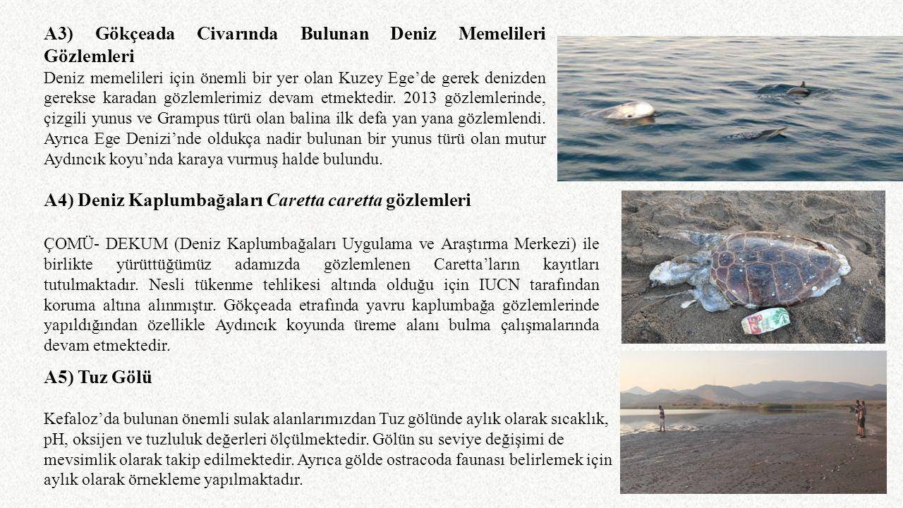 A3) Gökçeada Civarında Bulunan Deniz Memelileri Gözlemleri Deniz memelileri için önemli bir yer olan Kuzey Ege'de gerek denizden gerekse karadan gözle