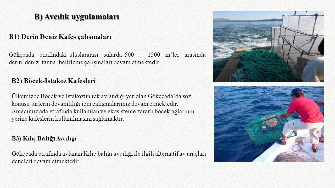 B) Avcılık uygulamaları B1) Derin Deniz Kafes çalışmaları Gökçeada etrafındaki uluslararası sularda 500 – 1500 m'ler arasında derin deniz fauna belirl