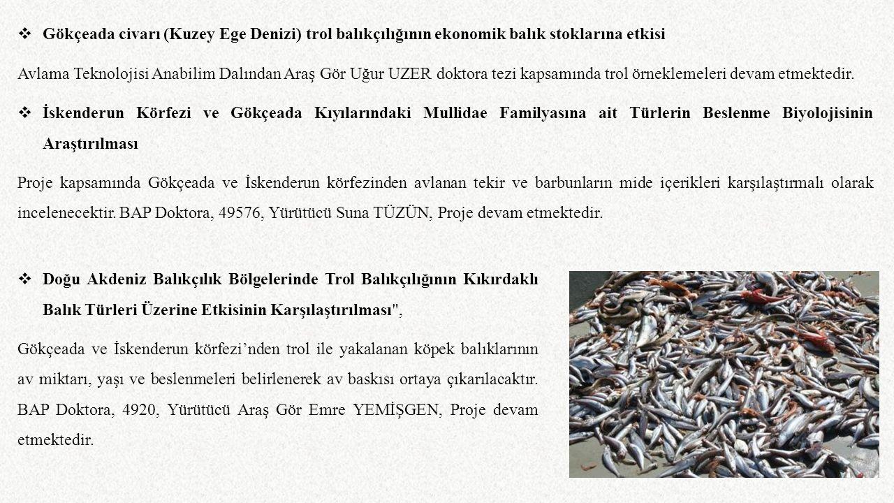  Gökçeada civarı (Kuzey Ege Denizi) trol balıkçılığının ekonomik balık stoklarına etkisi Avlama Teknolojisi Anabilim Dalından Araş Gör Uğur UZER dokt