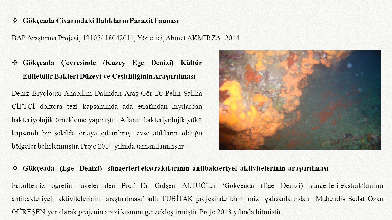  Gökçeada Civarındaki Balıkların Parazit Faunası BAP Araştırma Projesi, 12105/ 18042011, Yönetici, Ahmet AKMIRZA 2014  Gökçeada (Ege Denizi) süngerl