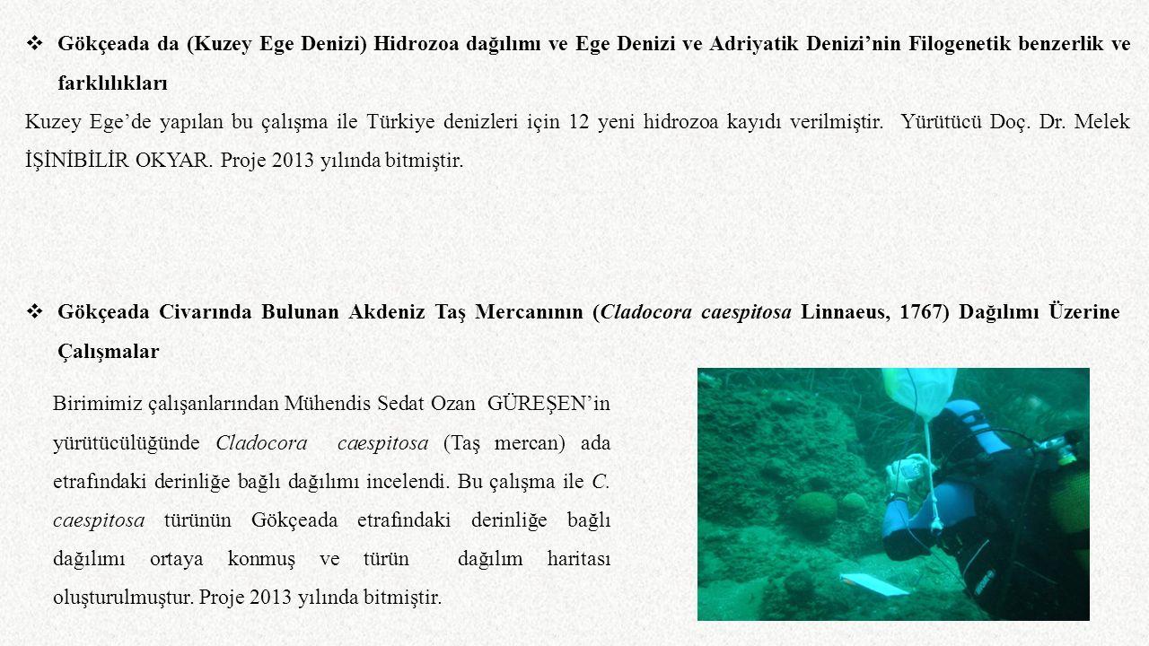  Gökçeada da (Kuzey Ege Denizi) Hidrozoa dağılımı ve Ege Denizi ve Adriyatik Denizi'nin Filogenetik benzerlik ve farklılıkları Kuzey Ege'de yapılan b