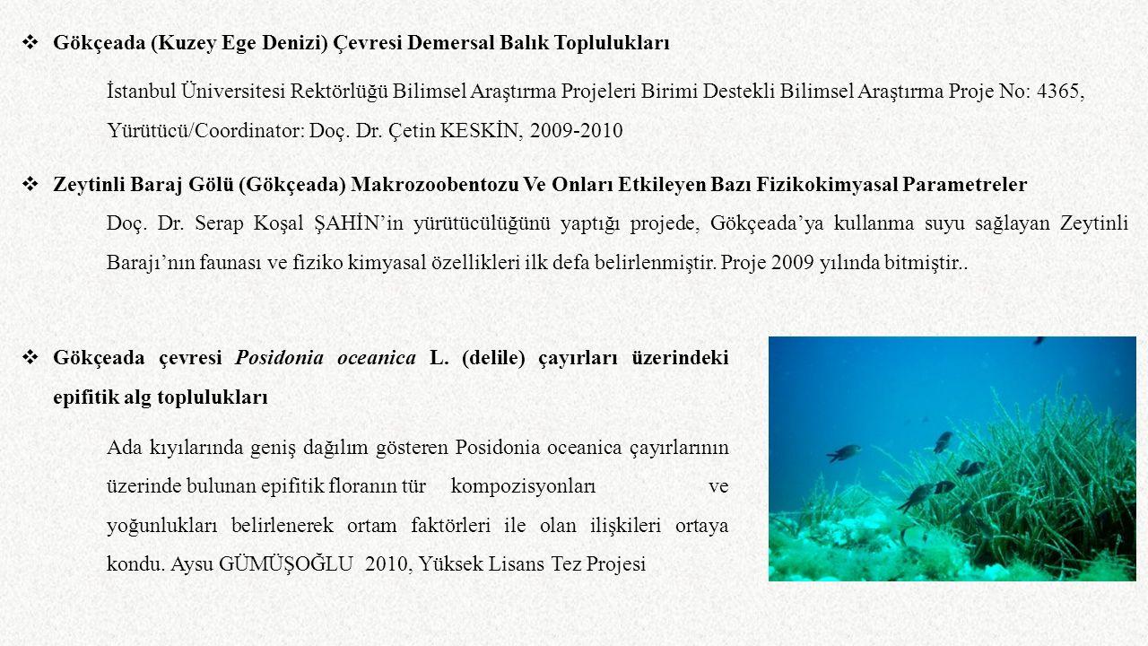  Gökçeada (Kuzey Ege Denizi) Çevresi Demersal Balık Toplulukları İstanbul Üniversitesi Rektörlüğü Bilimsel Araştırma Projeleri Birimi Destekli Bilims